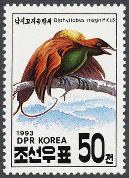 Image of Magnificent Bird-of-paradise
