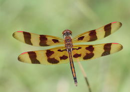 Image of Halloween Pennant