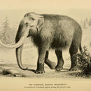 Image of Mammuthus Brookes 1828