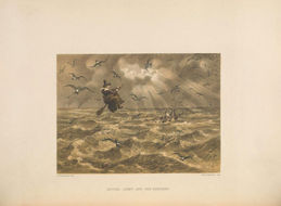 Image of European storm petrel