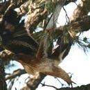Image of Little eagle
