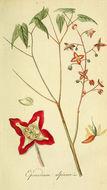Image of Alpine Barrenwort
