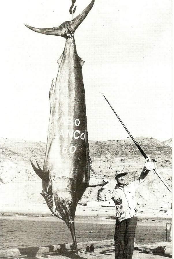 Image of Black Marlin