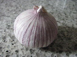 Image of cultivated garlic