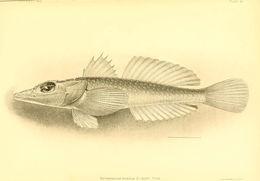 Image of Scorpionfish