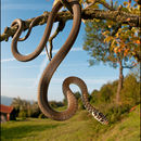 Image of Green Whip Snake