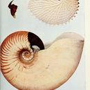 Image of Crusty nautilus