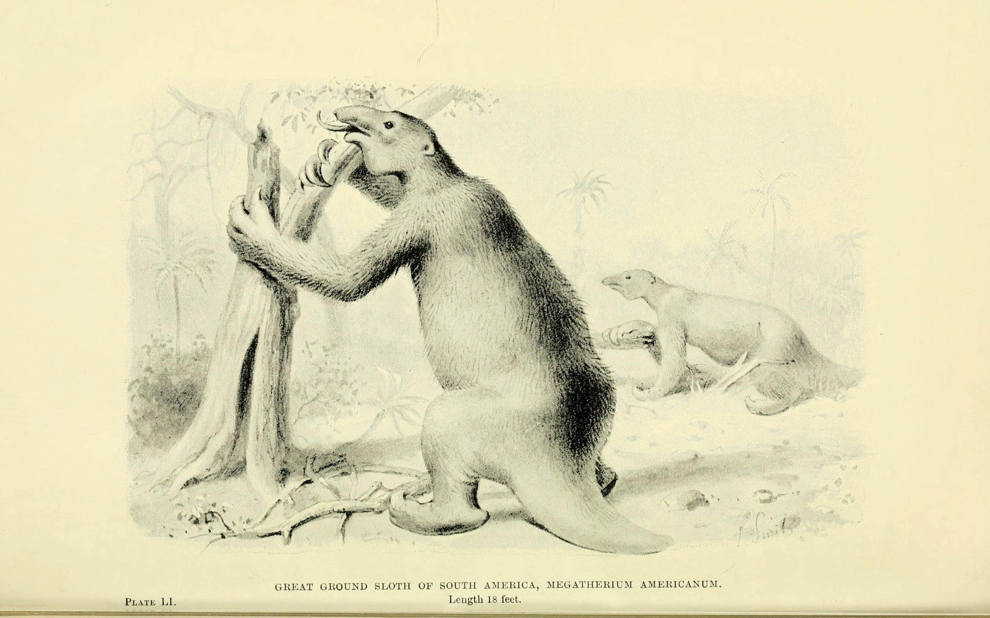 Image of <i>Megatherium americanum</i> English