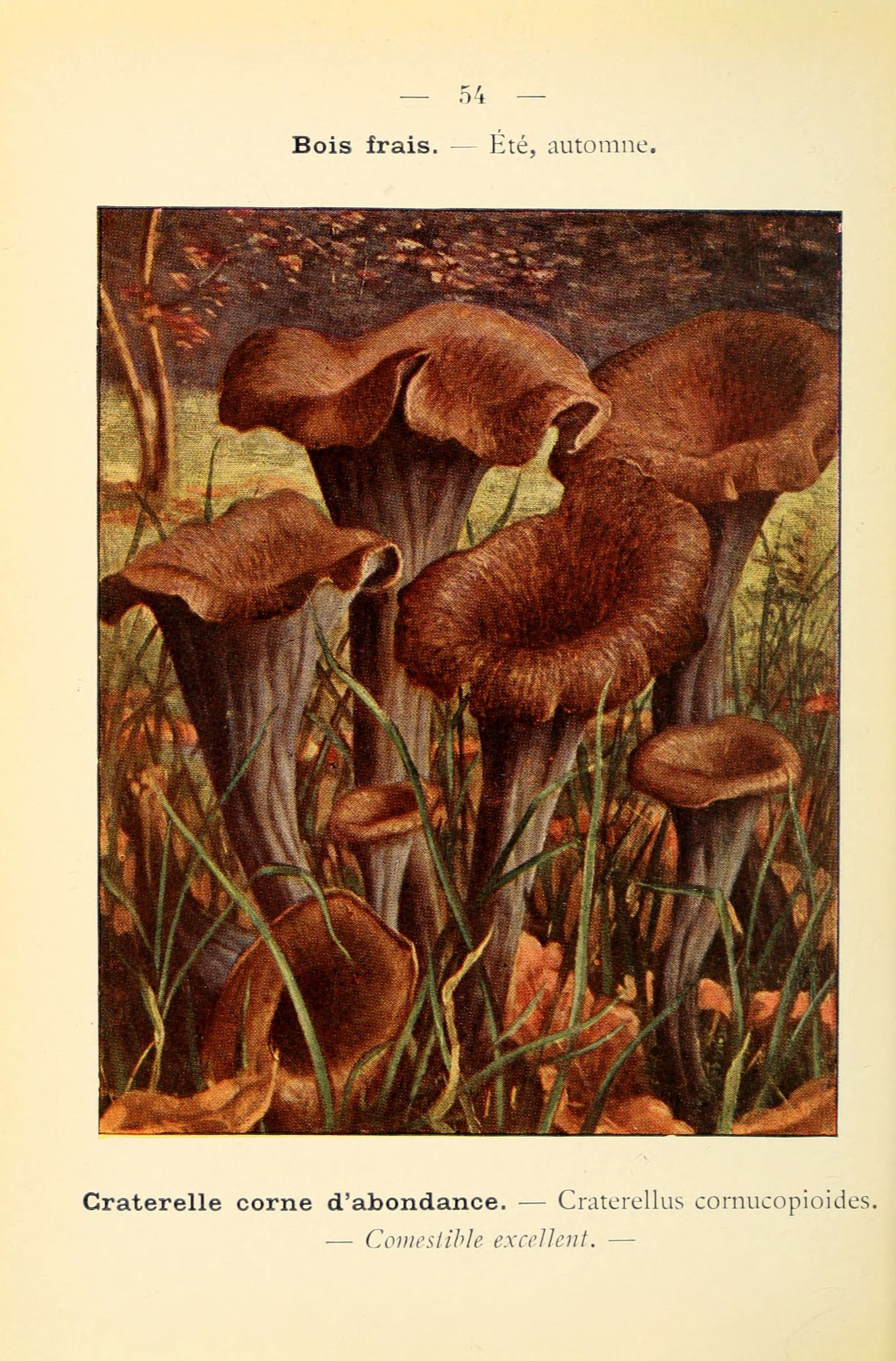 Image of Black Chanterelle