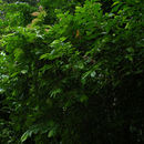 Image of Lozania