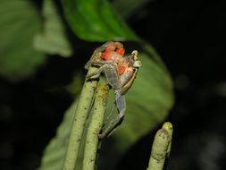 Image of Monkey's-Hand
