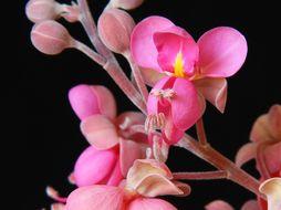 Image of pink shower