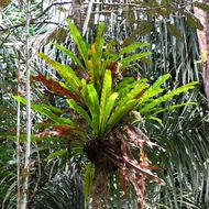 Image of graceful fern