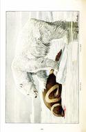 Image of Ribbon Seal
