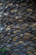 Image of Wood's Cycad