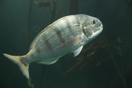 Image of Go-home-fish