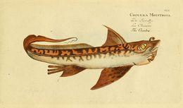 Image of Rabbitfish