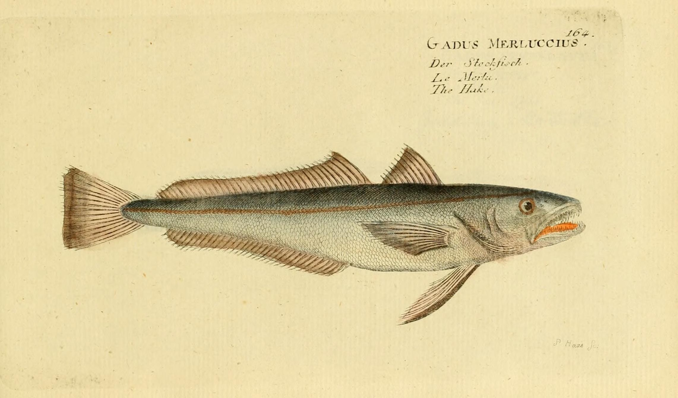 Image of Cornish Salmon