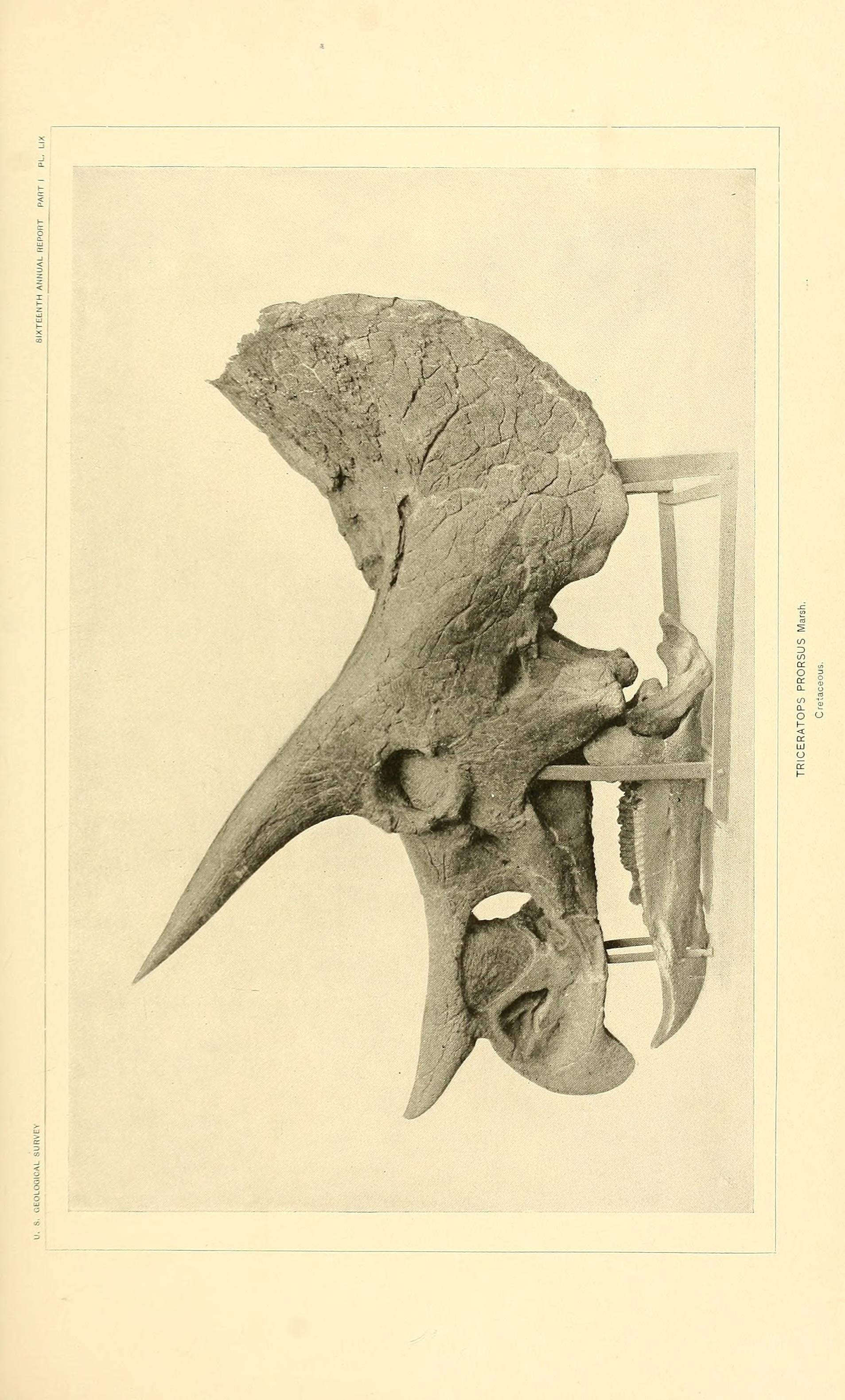Image of <i>Triceratops prorsus</i> (Marsh 1890)