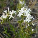 Image of diamond-flowers