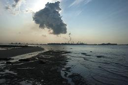 Image of Dugong