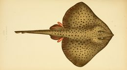Image of homelyn ray