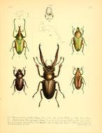 Image of <i>Theodosia telifer</i> (Bates 1889)