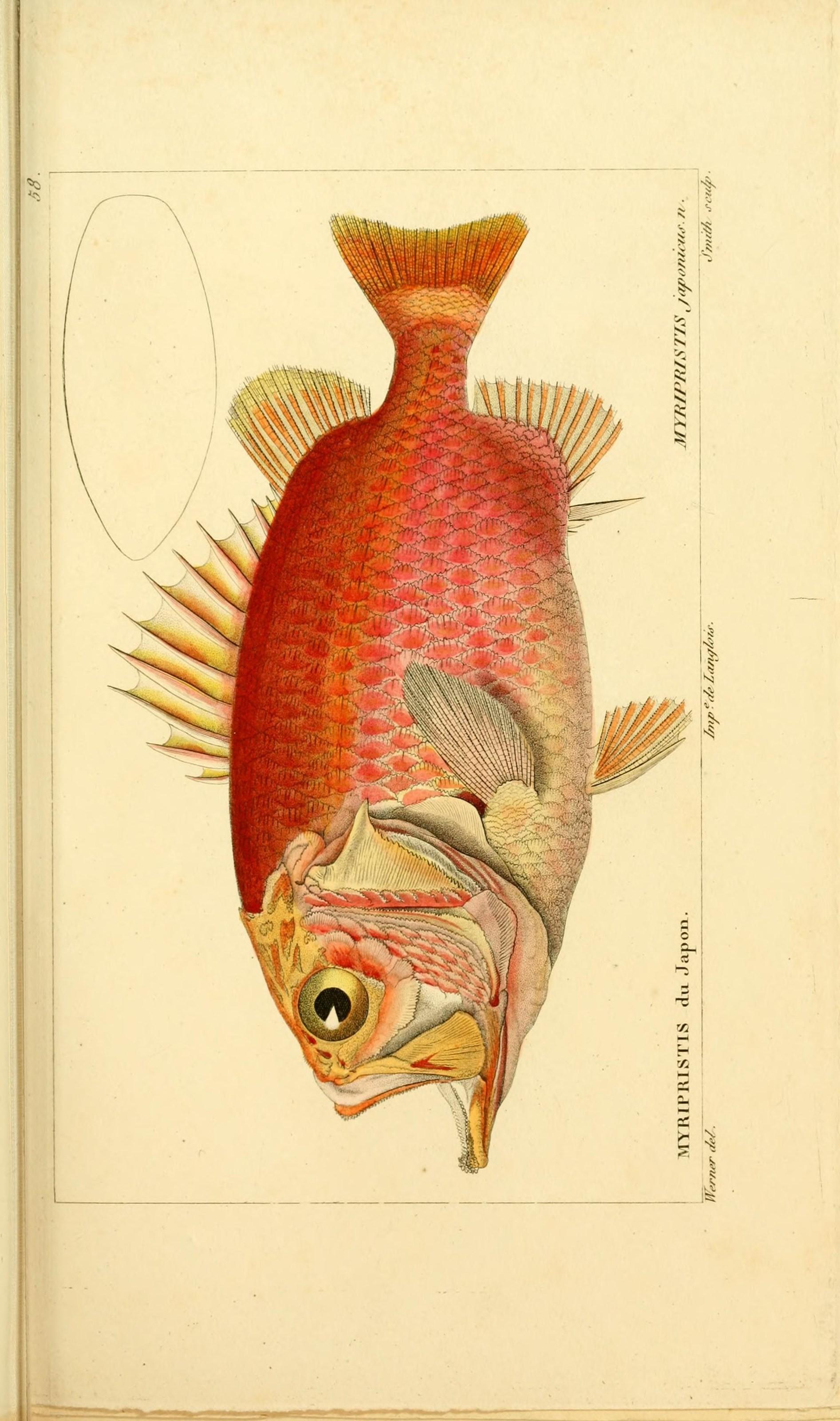 Image of Brocade Perch