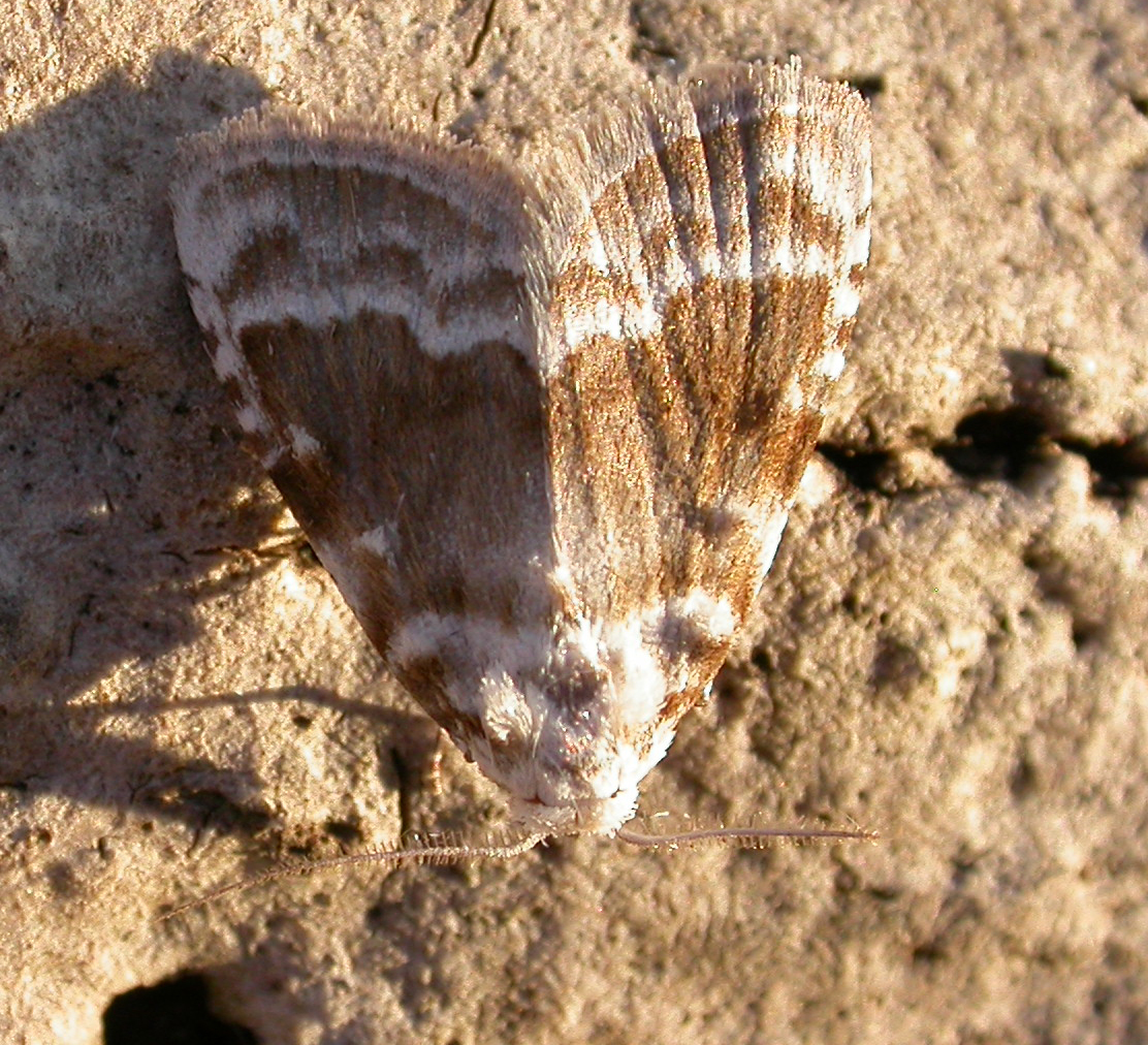 Image of Kent Black Arches