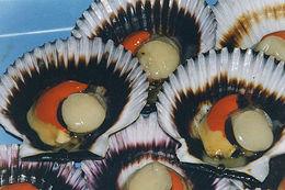 Image of Peruvian scallop
