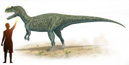 Image of <i>Ceratosaurus nasicornis</i> (Marsh 1884)