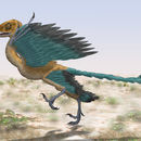 Image of Archaeopteryx