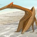 Image of <i>Quetzalcoatlus northropi</i> Lawson 1975