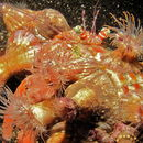 Image of Hermit Crabs