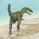 Image of <i>Neovenator salerii</i> Hutt et al. 1996