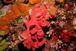 Image of ferruginous sponge