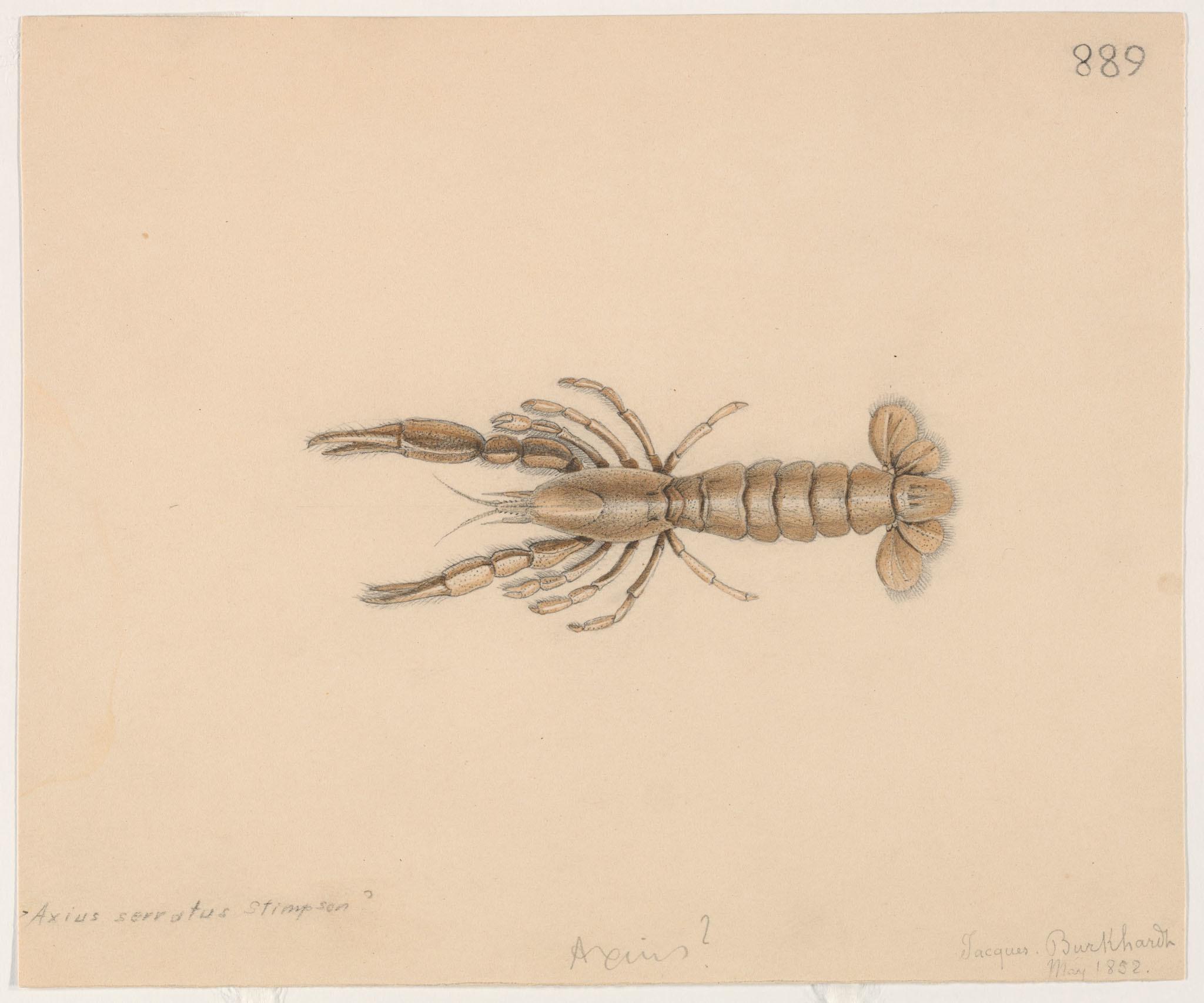 Image of lobster shrimp