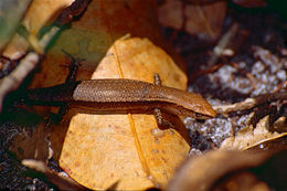 Image of Friendly Sunskink