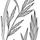 Image of rescuegrass
