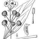 Image of Kansas arrowhead