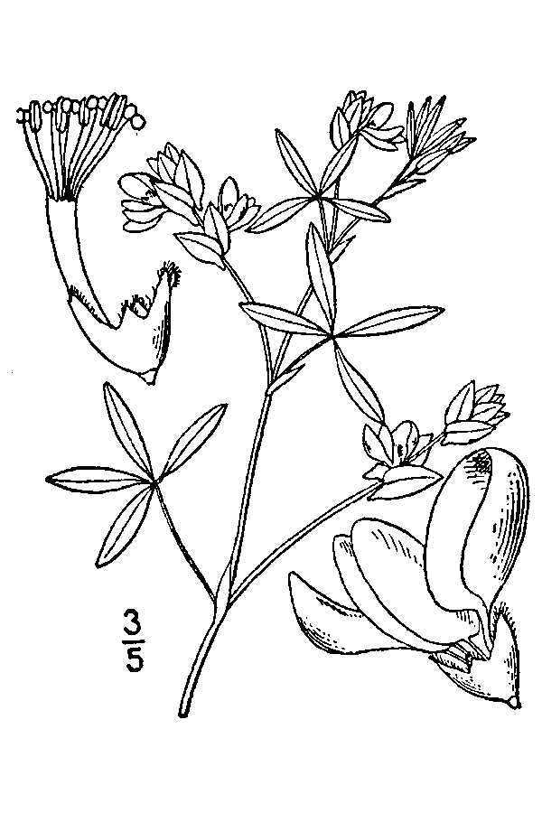Image of viperina