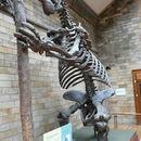 Image of megatheriid ground sloths