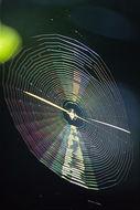 Image of Orb Weavers