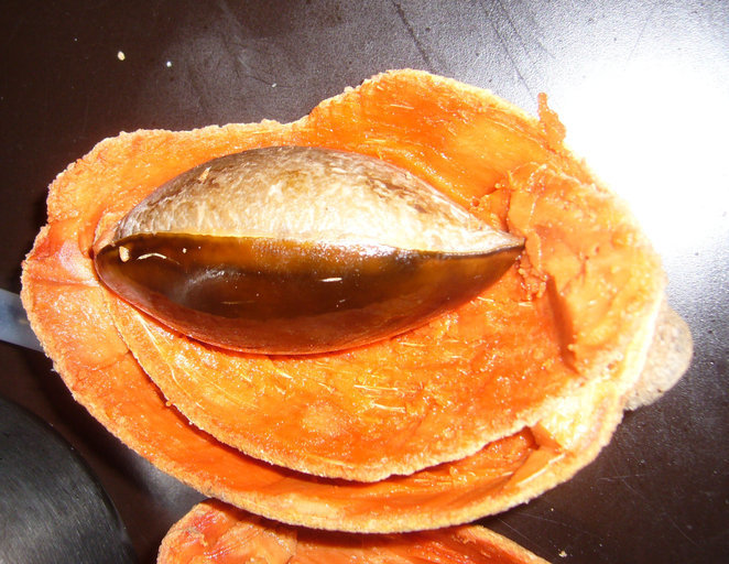 Image of mammee sapote