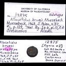 Image of <i>Allocotidus bruesi</i> Muesebeck 1963