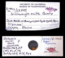 Image of <i>Trichomyia smithi</i> Quate 1963