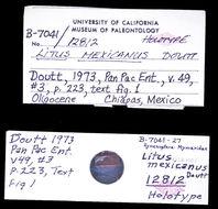 Image of <i>Litus mexicanus</i> Doutt 1973