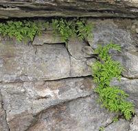 Image of fragile rockbrake