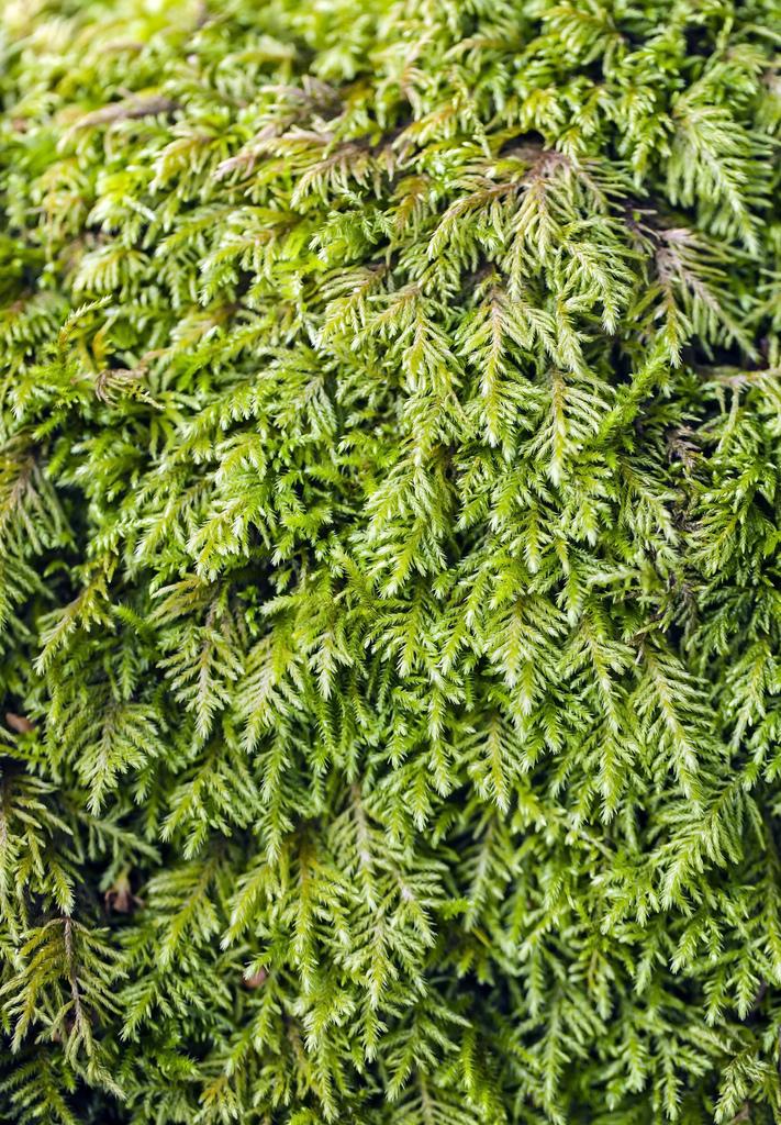 Image of bestia moss