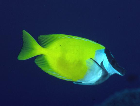 Image of Barracuda